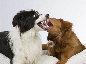 Dog on dog aggression in the home dog training nation for Dog on dog aggression in the home