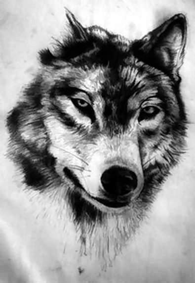 images  tattoo  pinterest wolves wolf