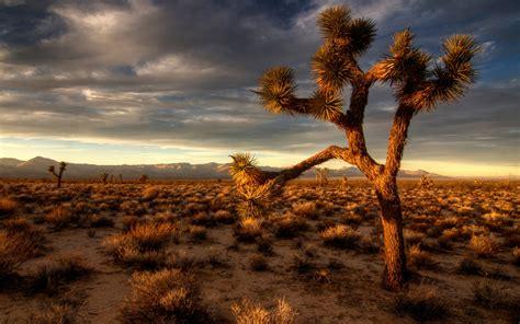 Desert Scene High Resolution Wallpaper Nature And