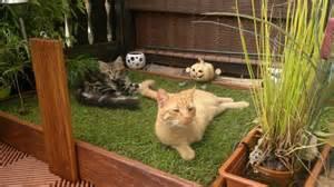 kratzbaum balkon die ideale katzenwohnung seite 5 katzen und familie wohnungshaltung katzenforum