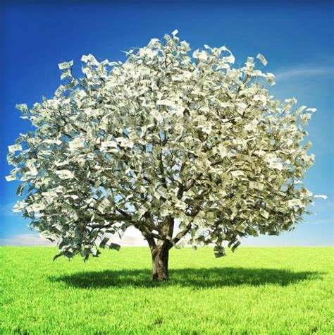 Images Of Money Tree An Awfully Big Adventure The Tale Of The Magic Money