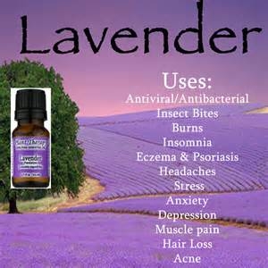 Pictures of Lavender Oil Uses