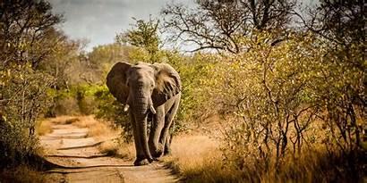 Safari African Animals Sabisabi Travel Brochure Functional