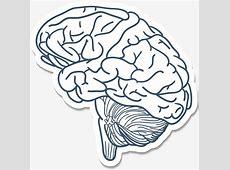 O Cérebro DOS Desenhos Animados, O Cérebro, O órgão