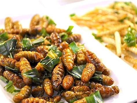 cuisine insectes comestibles insecte comestible