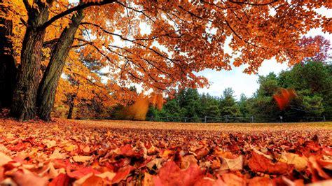 taman  musim gugur hd wallpaper desktop layar lebar