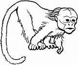Monkey Coloring Uakari Colouring Chimpanzee Affe Monkeys Uacari Abe Colorir Ausmalbilder Kleurplaat Macaco Curious Kleurplaten Printable Colorare Gratis Aap Tegninger sketch template