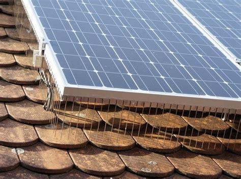 vogelschutz  photovoltaikanlagen mit  reihigen
