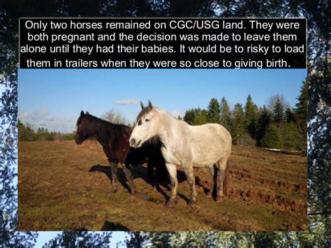 scotia nova cgc horses usg