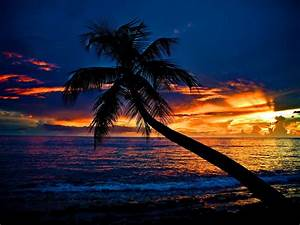 Tropical Sunset Wallpaper and Background Image | 1600x1200 ...