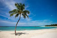 Tropical Beaches and Palm Trees Ocean