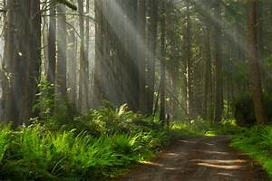 Share the Experience | Redwood Forest,california