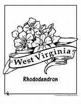 Coloring Flower Virginia West State Rhododendron Pages Drawing Indiana Printable Print Tattoo Flowers Classroomjr Woo Template Jr Adult Sketch States sketch template