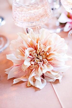 bay area wedding  kohl mansion  meg perotti