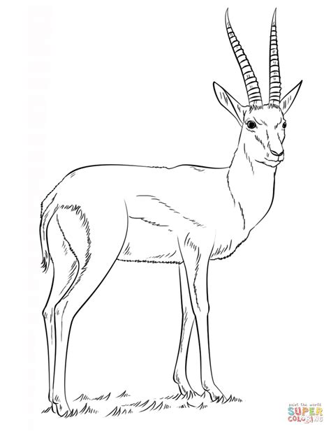 Rugby Kleurplaat by Springbok Coloring Pages And Print For Free
