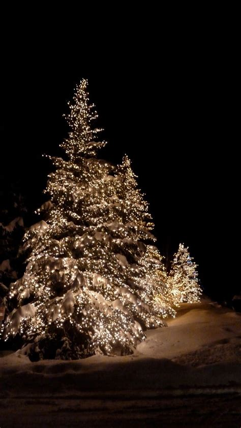 christmas lights in trees the magic of outdoor christmas lights in the snow love
