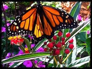 Bambis butterfly house 16 photos botanical gardens for Butterfly garden orlando
