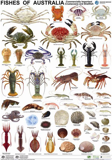 pin  gary huerto  fyi fish ocean creatures fish chart
