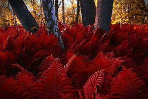 Where the Red Fern Grows | Lise's Letters