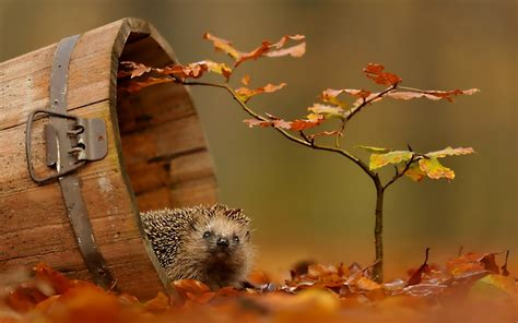 Fall Wallpaper With Animals - fall wallpaper with animals wallpapersafari