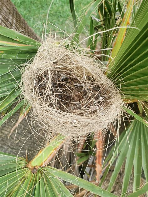 Learning About Bird Nests