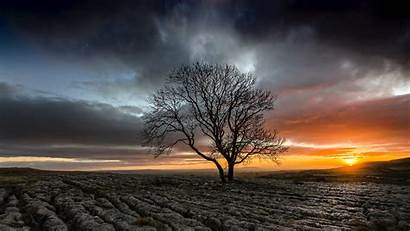 Sunset Tree Field Drought Lonely 4k Wallpapers