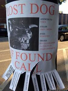 Fun Day Poster Template The 10 Most Awesome Lost Pet Flyers Losing A Dog Losing