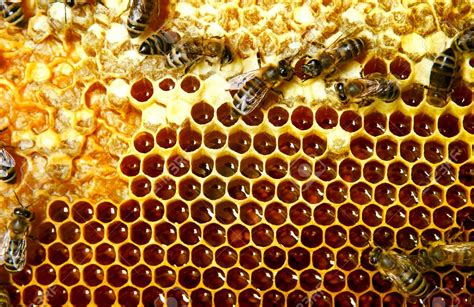 cr馘ence cuisine castorama carrelage nid d abeille carrelage nid d 39 abeille effet m tal bross forest