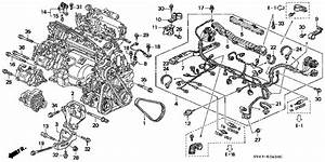 Honda Online Store   1996 Accord Engine Wire Harness