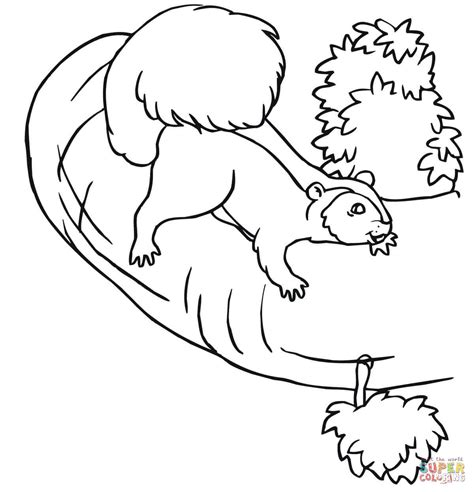Squirrel and Tree Coloring Pages
