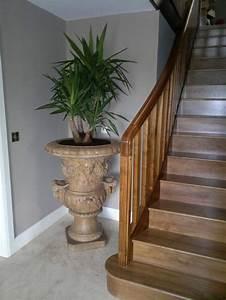 Pflanzen Im Treppenhaus : palmlilie eine bezaubernde zier und nutzpflanze ~ Orissabook.com Haus und Dekorationen