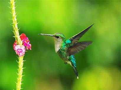 Colibri Hummingbird Animated Hummingbirds Bird Geocache Gifimage