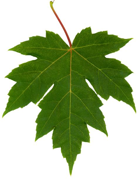 maple leaf la caraba en bicicleta i wish i could touch a ulises alvarado