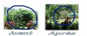 Taille De L Hibiscus : meteo juillet ~ Melissatoandfro.com Idées de Décoration