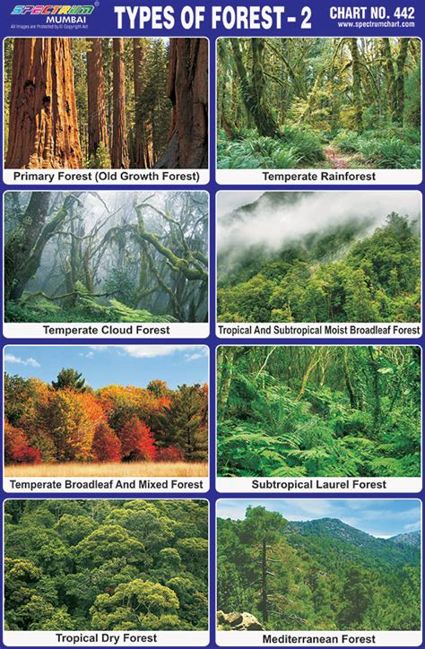 Spectrum Educational Charts: Chart 442 Types of Forest 2