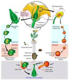 Etamine Cuisine Définition by Biology For Kids Flowering Plants