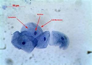 Cells - Rumney Marsh Academy Science Revere, Massachusetts
