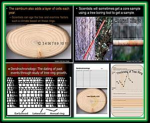 Tree Ring Dating Lesson  Dendrochronology  Plant Vascular