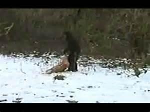 2016 Bigfoot Sightings