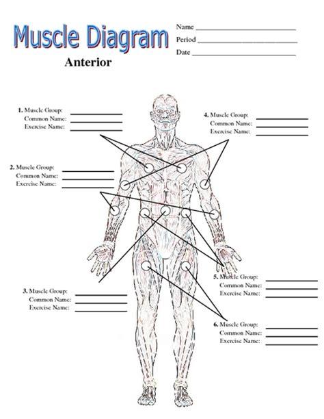 Muscle Labeling Worksheet Hypeelite