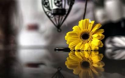 Yellow Background Flower Flowers Wallpapers Widescreen Screen