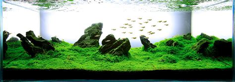 The Best Aquascape by The Top 5 Best Aquascaping Plants Aquarium Info