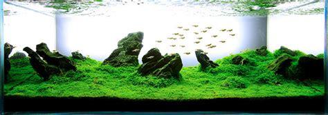 Aquascaping Plants by The Top 5 Best Aquascaping Plants Aquarium Info
