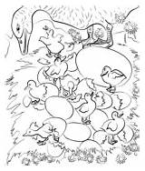 Coloring Bear Hunt Going Another Duckling Ugly Last Were sketch template