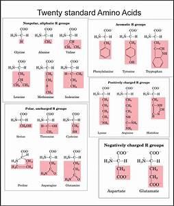 Bio 031 Study Guide  2013-14 Leicht
