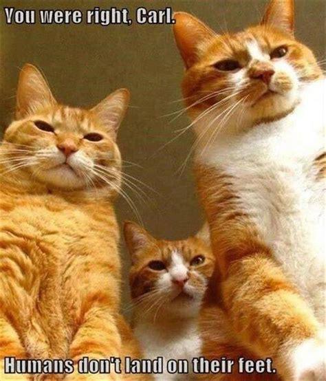 Top 58 Funny Cats Pics  Funny Cat Dompictcom