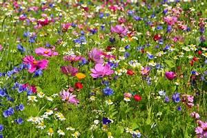 Wiese Mit Blumen : blumenwiese anlegen und pflegen detaillierte anleitung ~ Watch28wear.com Haus und Dekorationen