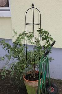 Rosen Für Balkon : rankhilfe f r rosen auf dem balkon mein sch ner garten forum ~ Michelbontemps.com Haus und Dekorationen
