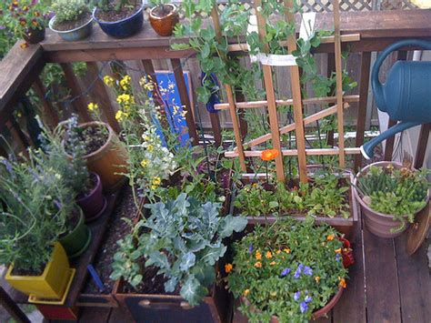 gardening in small spaces balcony garden epic places in small spaces eat drink better