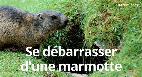 astuce de cuisine éloigner les marmottes comment s 39 en débarrasser